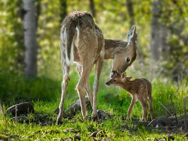 """""""Bei Mama ist es aber auch sehr schön!"""" – Bild: Shutterstock / Holly Kuchera"""