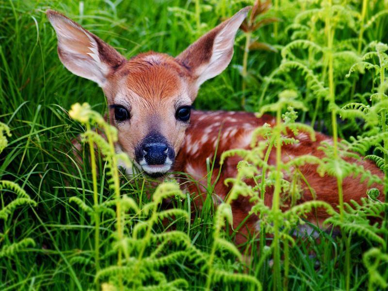 """Das ist mein Versteck!"" – Bild: Shutterstock / Ruimin Wang"