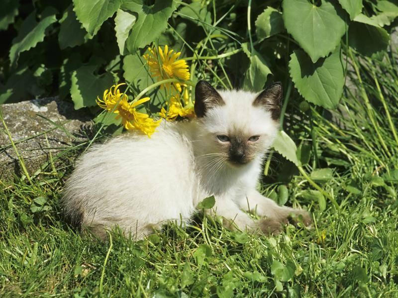 Als Kitten ist sie besonders bezaubernd – Bild: Shutterstock / Bildagentur Zoonar GmbH