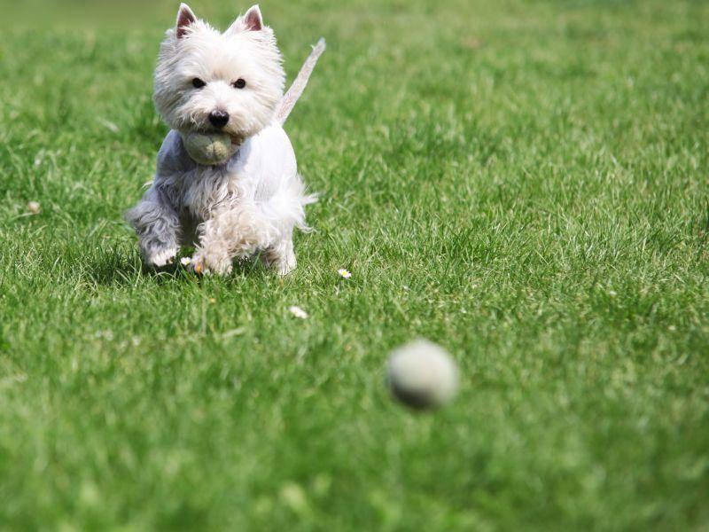 """""""Gleich habe ich den Ball - also den zweiten!"""" – Bild: Shutterstock / naten"""