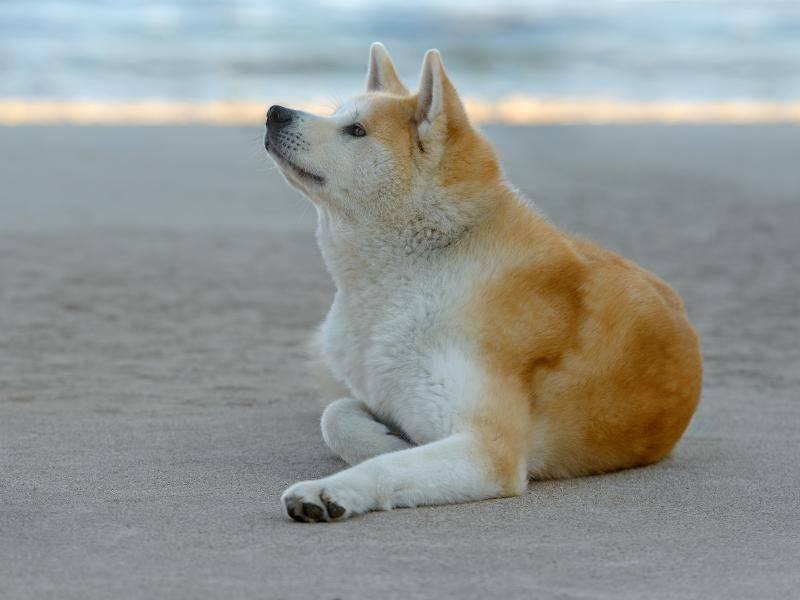 """""""Ist das schön, am Strand zu liegen!"""" – Bild: Shutterstock / tsik"""