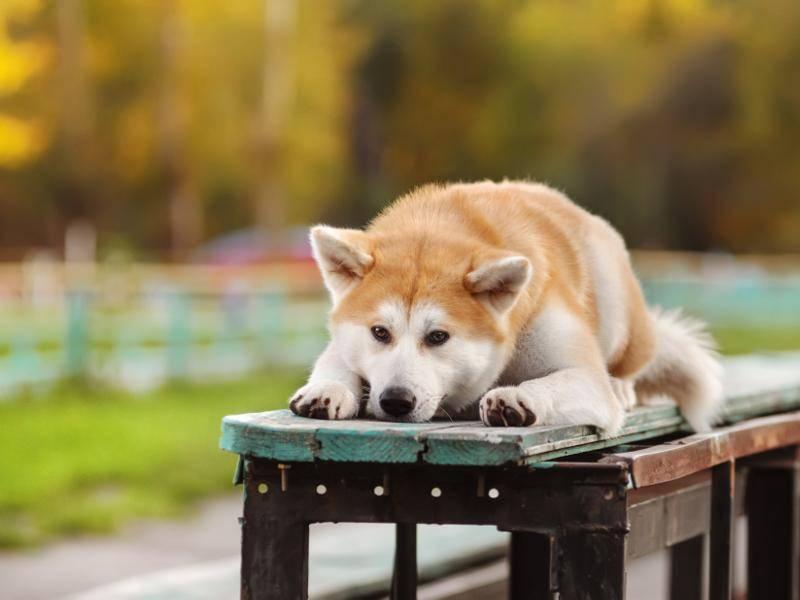Ein kleines Päuschen muss auch ab un an sein – Bild: Shutterstock / Anna Tyurina