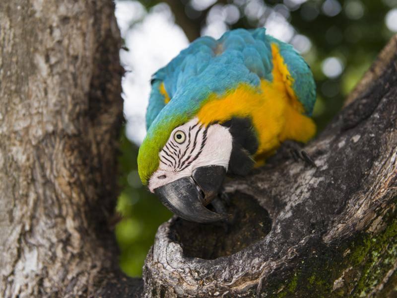 Sie leben in tropischen und subtropischen Wäldern – Bild: Shutterstock / Anastasia Demkina