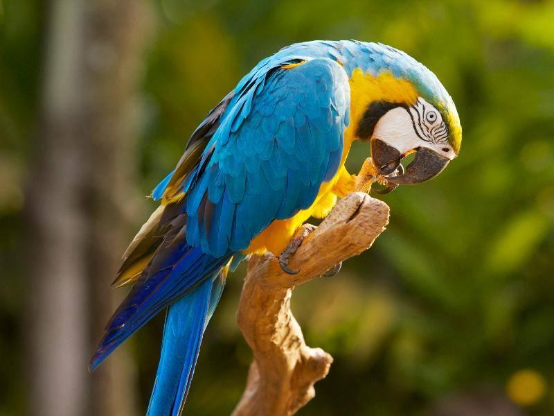 Ihr Gefieder fällt durch wunderschöne, leuchtende Farben auf – Bild: Shutterstock / Dan Costa