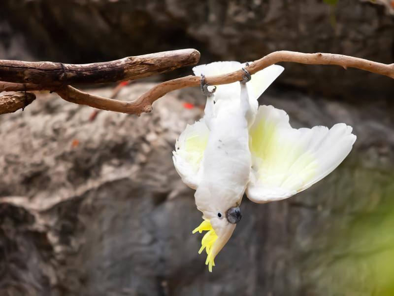 """""""Ich hänge hier nur so herum!"""" – Bild: Shutterstock / nattanan726"""