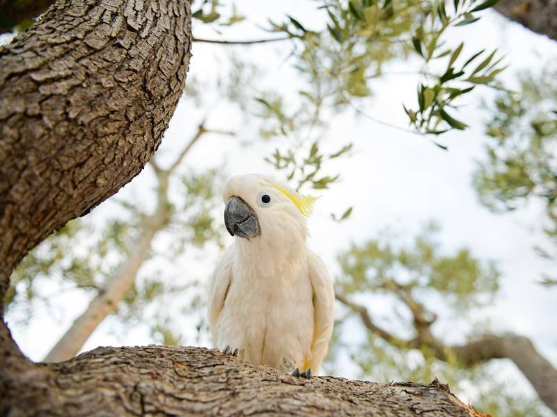 """""""Das ist mein Baum!"""" – Bild: Shutterstock / serenarossi"""