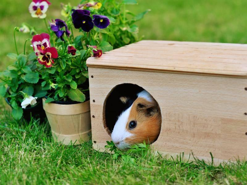 In einem kleinen Häuschen fühlt sich der kleine Racker wohl – Bild: Shutterstock / VikaRayu