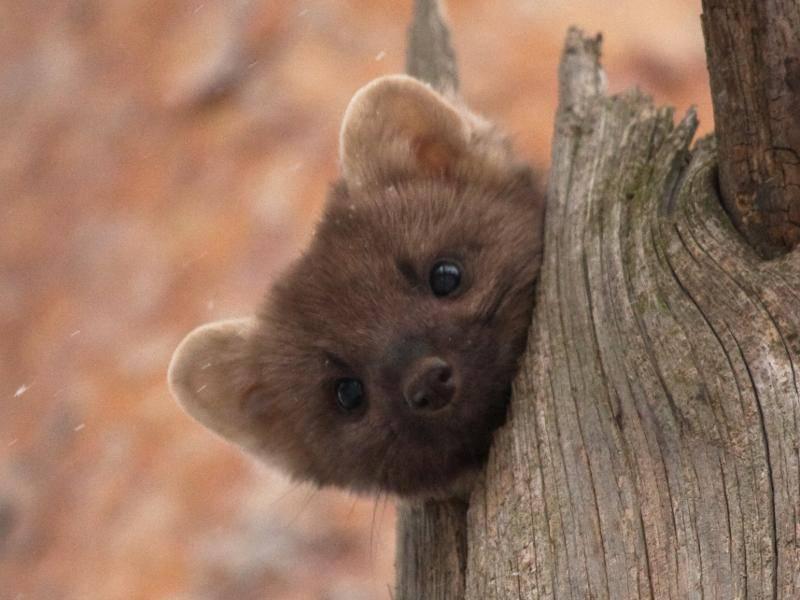 """""""Bin ich nicht süß?"""" – Bild: Shutterstock / Vitaly Ilyasov"""