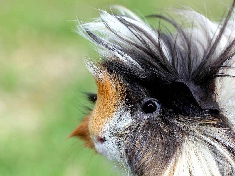 Wilde Frisuren liegen im Trend – Bild: Shutterstock / Nicole Sharp