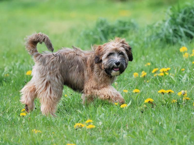 Dabei genießt der liebenswerte Hund die Zeit in der Natur – Bild: Shutterstock / manfredxy