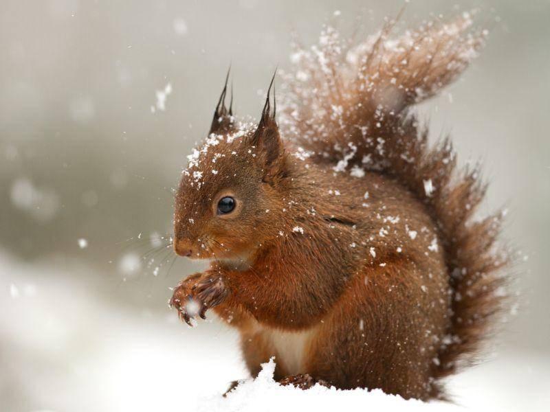 Damit es sein gemütliches Nest im Winter immer nur ganz kurz verlassen muss – Bild: Shutterstock / Giedriius