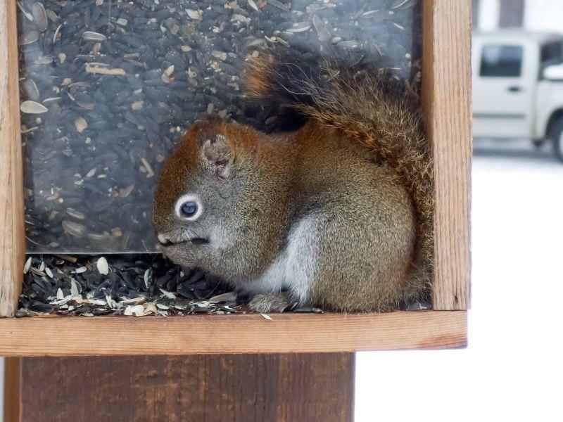 Eichhörnchenfutter und Futterhäuschen für den Winter – Bild: Shutterstock / shipfactory