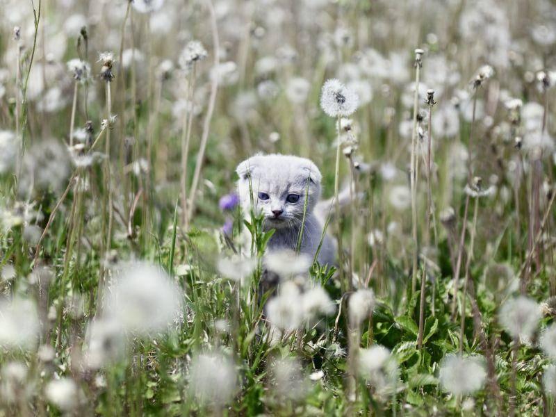 Dieser hübsche graue Jungspund genießt die Zeit im Pusteblumenfeld – Bild: Shutterstock / Ludmila Yilmaz