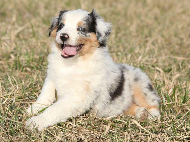 Hat dieser Jungspund nicht wunderschöne Augen? – Bild: Shutterstock / Zuzule