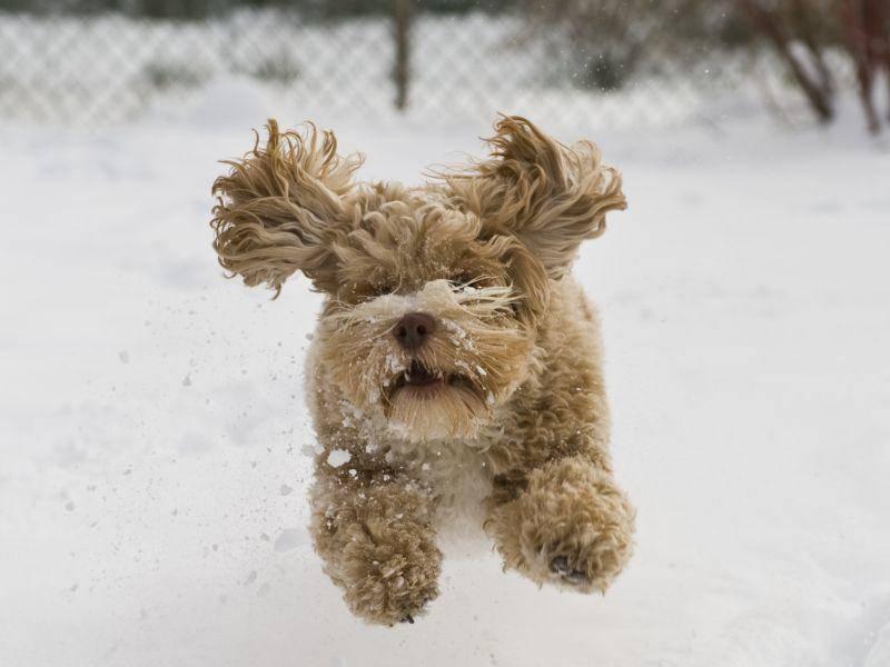 """""""ich kann nicht mehr bremsen!!!"""", scheint sich dieser schwungvolle Welpe zu denken – Bild: Shutterstock / Caleb Foster"""