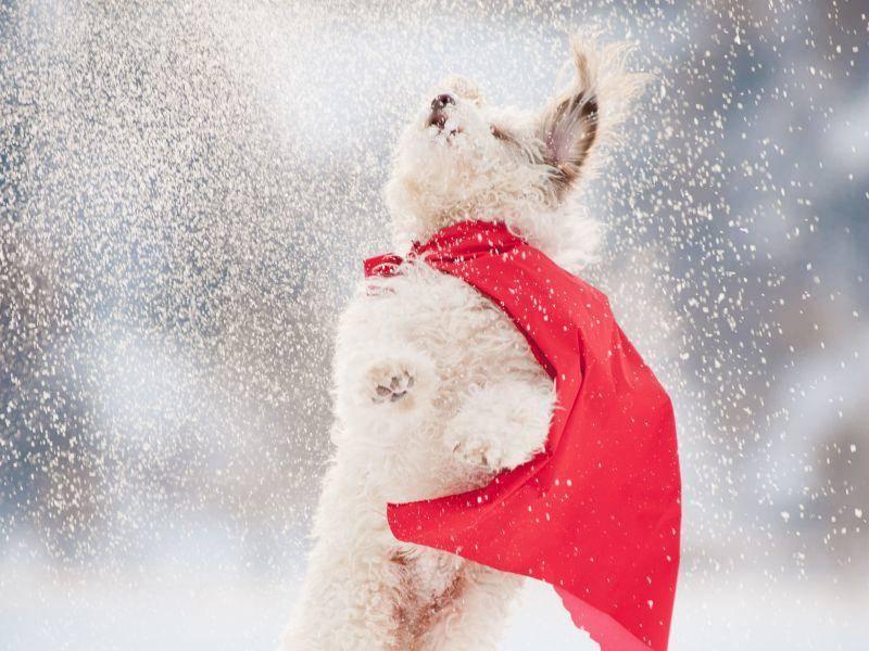 """""""Schaut mal, wie hoch ich springen kann, um Schneeflocken zu fangen!!!"""" – Bild: Shutterstock / Ksenia Raykova"""