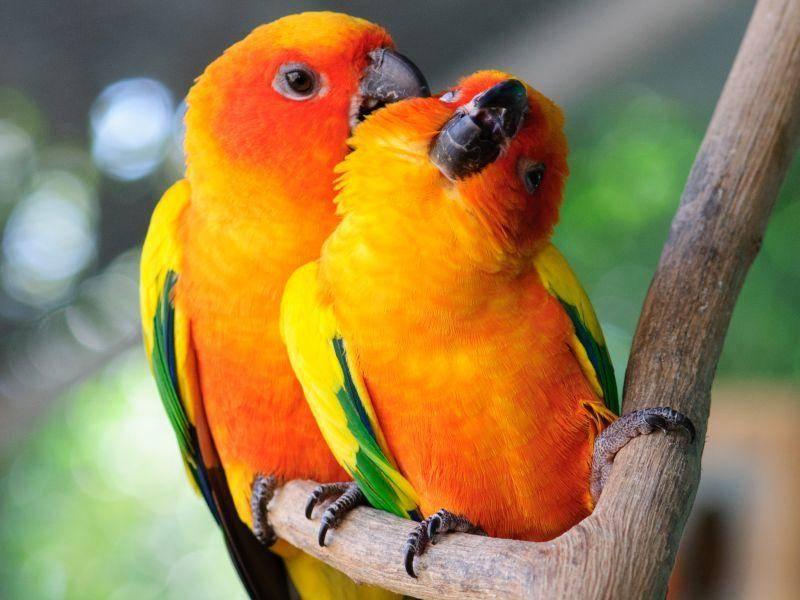 Unzertrennliche kuscheln mit ihren Partnern, pflegen sich und sind einfach immer zusammen – Bild: Shutterstock / Kitty Bern