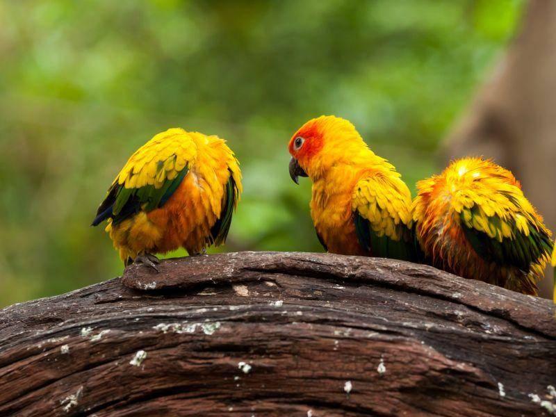 Unzertrennliche gibt es in verschiedenen Arten und wunderschönen Farben – Bild: Shutterstock / santol
