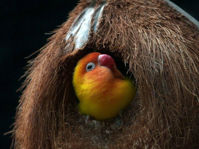 Im Nest werden die Junge aufgezogen – Bild: Shutterstock / Jaggat Rashidi