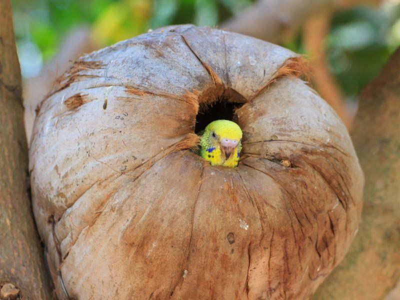 Kleiner Vogel, großes Häuschen – Bild: Shutterstock / Ta Khum