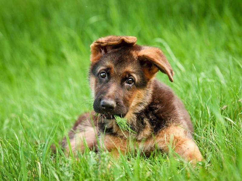 """""""Wollen wir zusammen spielen?"""", will dieser Hundewelpe offenbar fragen ... – Bild: Shutterstock / Rita Kochmarjova"""