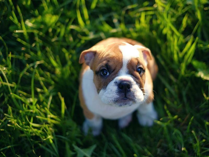 """""""Darf ich auch mitspielen?"""" – Bild: Shutterstock: Alexander Khokhlov"""