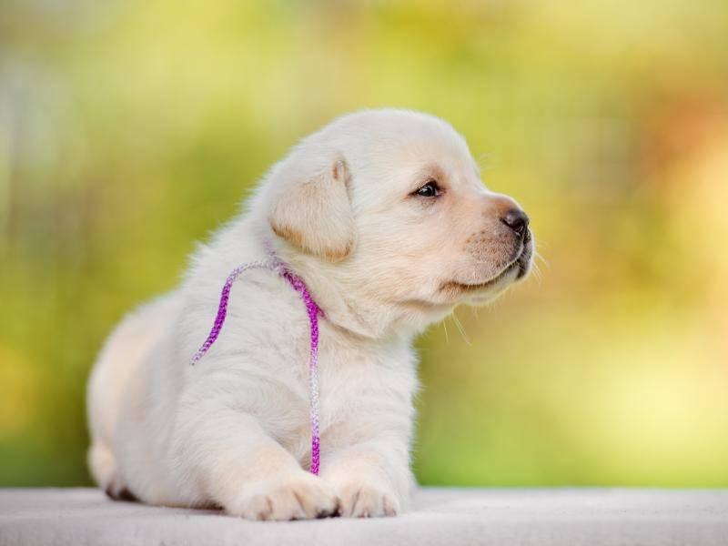 """""""Bin ich nicht niedlich?"""" – Bild: Shutterstock / otsphoto"""