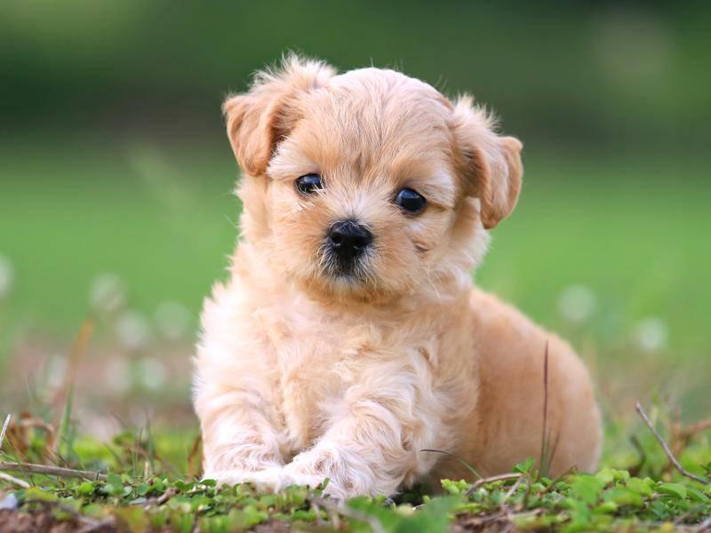 """... """"Ich bin aber auch süß!"""" – Bild: Shutterstock / PCHT"""
