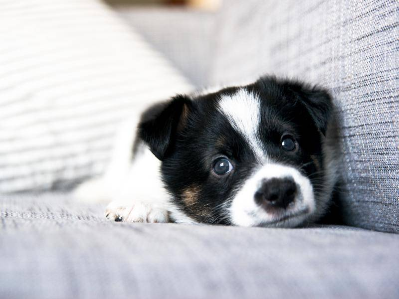 ... und dieses kleine Kerlchen entspannt eine Runde auf dem Sofa – Bild: Shutterstock / Anna Hoychuk