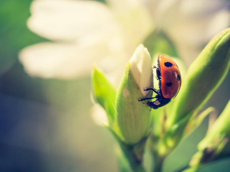 """Das schmeckt aber gut!"" – Bild: Shutterstock / Milosz_G"