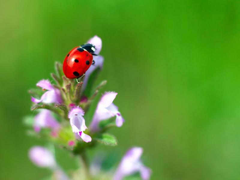 ... wie zum Beispiel knalligem Rot ... – Bild: Shutterstock / Innakote