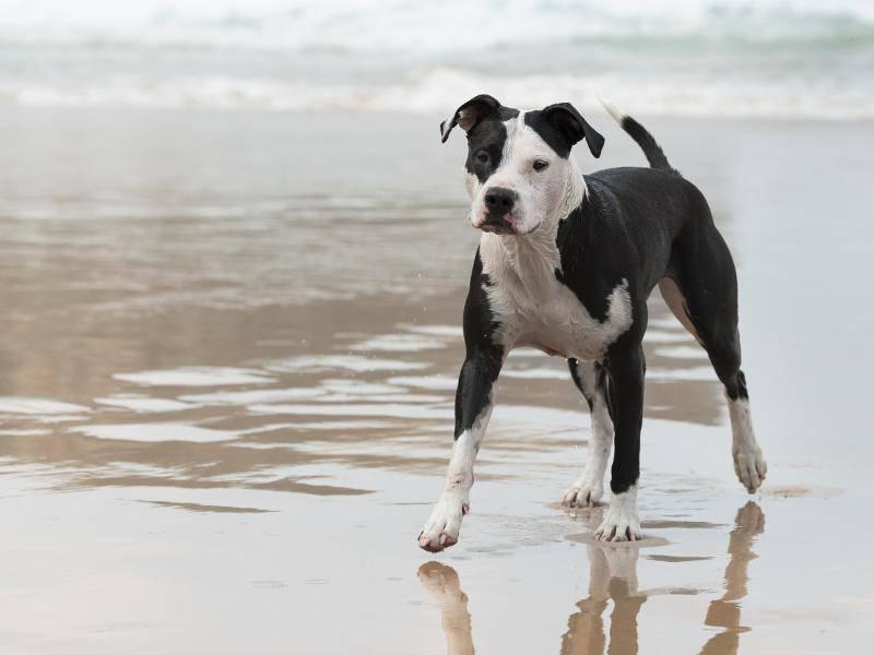 """""""In der freien Natur halte ich mich auch sehr gerne auf!"""" – Bild: Shutterstock / tsik"""
