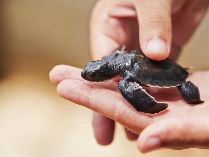 Diese kleine Schildkröte genießt lieber die Streicheleinheiten – Bild: Shutterstock / Jaromir Chalabala