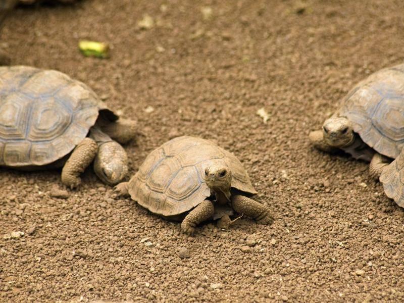 """""""Wo ist denn die kleine Schildkröte? Ich sehe sie nicht!"""" – Bild: Shutterstock / Kayla A"""