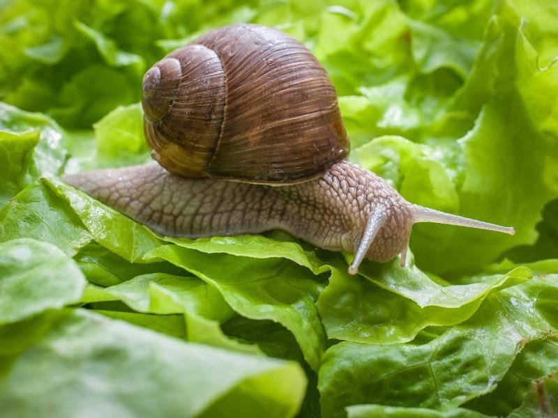 Bei der Ernährung gibt es von Art zu Art Unterschiede ... – Bild: Shutterstock / Alexander Raths