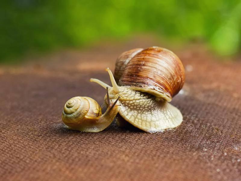 ... das aus Kalk besteht – Bild: Shutterstock / Kosobu