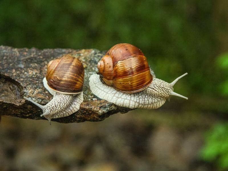 Außerdem soll es noch viele unerforschte Schneckenarten geben – Bild: Shutterstock / Coolnina
