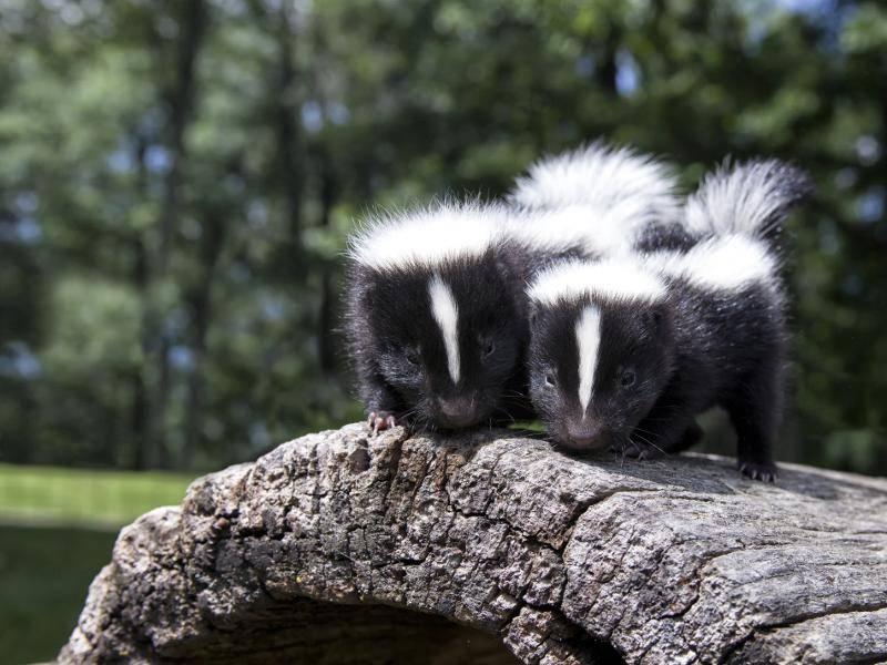 Bereits nach ungefähr einem halben Jahr verlassen die Jungtiere dann ihre Mutter – Bild: Shutterstock / Critterbiz
