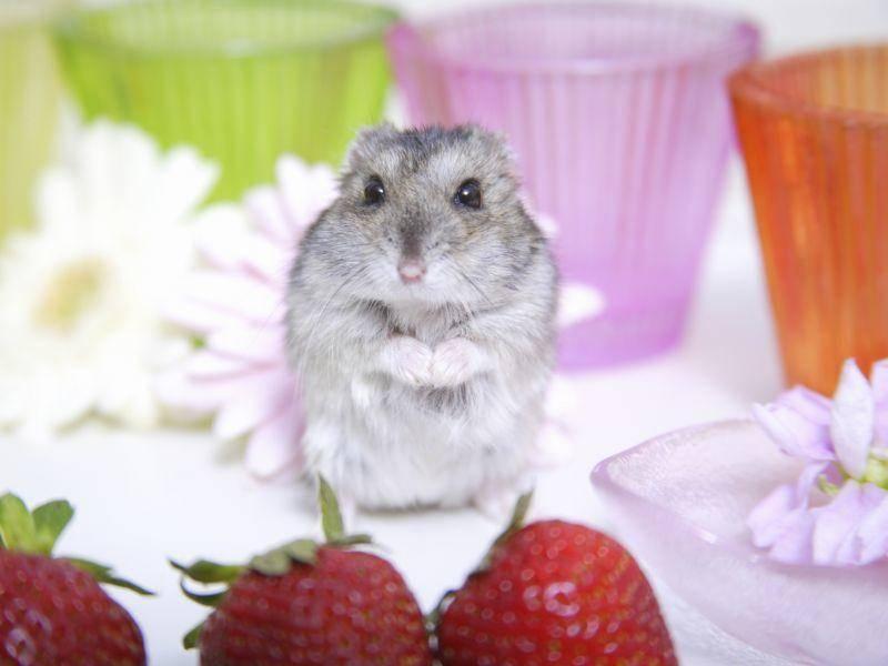 Na, hast du dich verlaufen, kleiner Hamster? – Bild: Shutterstock / KPG Payless