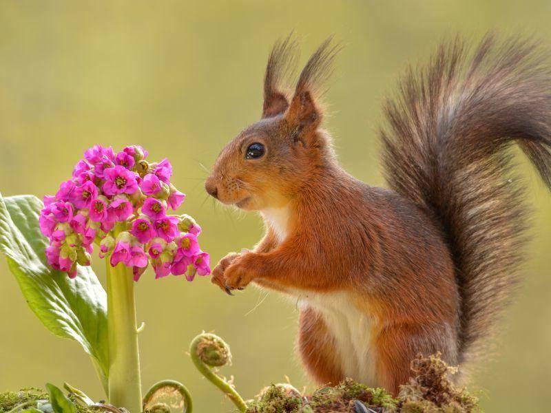 Blümchen pflücken? – Bild: Shutterstock / geertweggen