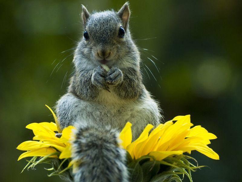 Hörnchen Nummer 2 weiß, wo der bequemste Platz der Welt ist – Bild: Shutterstock / Heiko Kiera