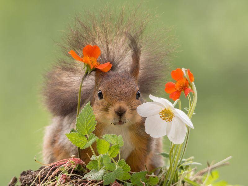 So klappt das mit dem Versteckenspielen nicht, kleines Hörnchen – Bild: Shutterstock / geertweggen
