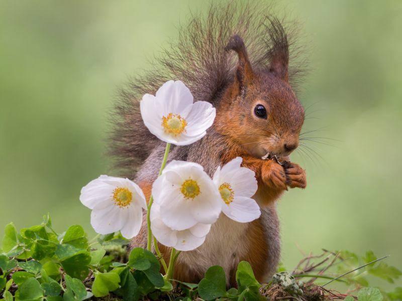 Dieses Eichhörnchen findet: Neben Blümchen schmeckt's am besten! – Bild: Shutterstock / geertweggen