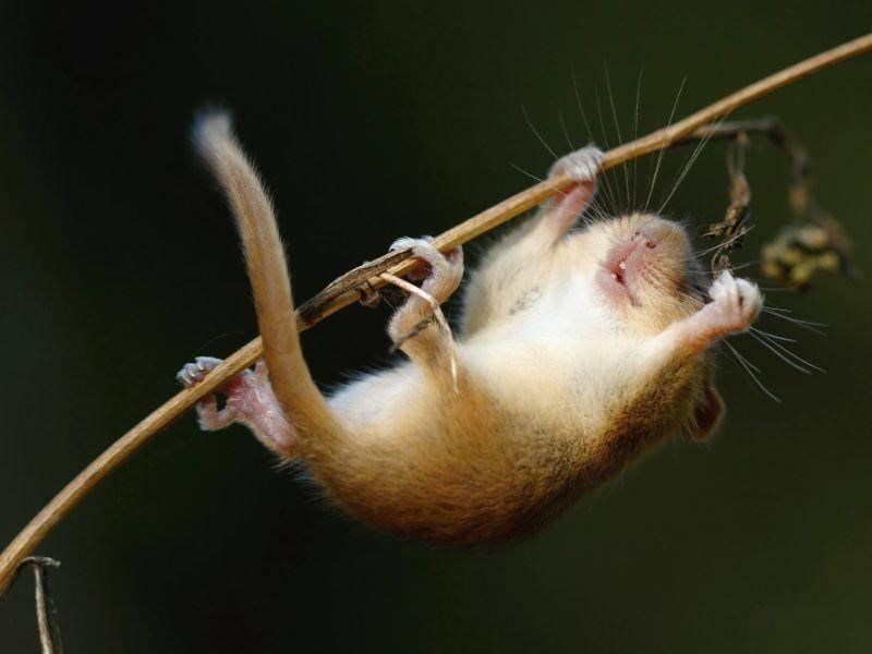 Huch, nicht fallen, kleine Maus! – Bild: Shutterstock / Miroslav Hlavko