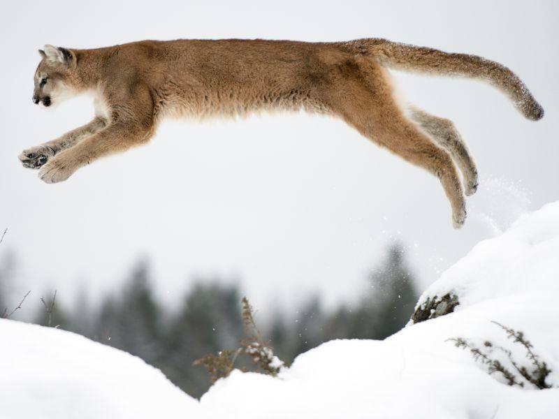 ... und springen ... – Bild: Shutterstock / Jeannette Katzir Photog