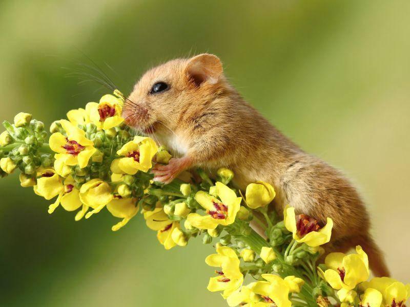 """Süßer Klettermax: """"Ah, ich liebe Blumen!"""" – Bild: Shutterstock / Miroslav Hlavko"""