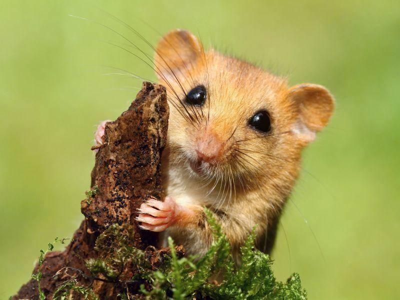 """""""Spielt jemand mit mir Verstecken?"""" – Bild: Shutterstock / Miroslav Hlavko"""