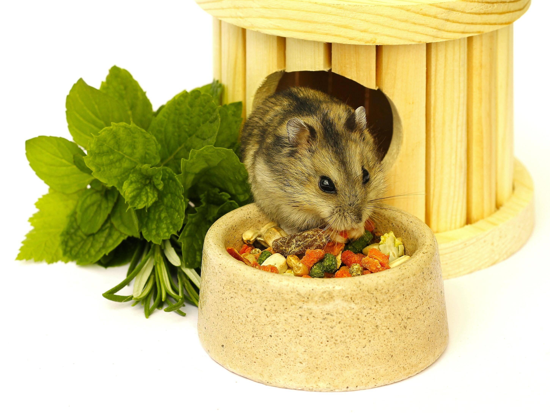 """""""Jetzt gibt's erst mal was zu essen!"""" Guten Appetit, süßer Hamster! – Bild: Shutterstock / Vladimira"""