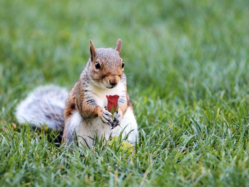 """""""Wollen Rose kaufen?"""" – Bild: Shutterstock / cpaulfell"""