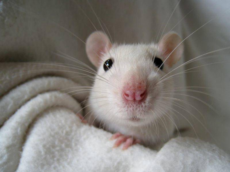 Versteckenspielen macht den verspielten Tieren Spaß – Bild: Shutterstock / 1stGallery